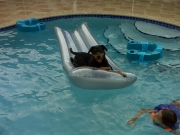 Ralphie chillin in the pool