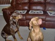 Bella & Ruby