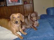 Cleo & Missy