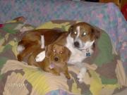 Missy & Ginger