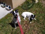 Leia & Joey