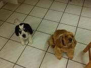 Goldie & Becky