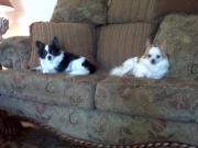 Boomer & Chewie
