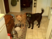 Black Jack & Precious